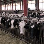 Bluebonnet Adventures: Visiting a Dairy Farm